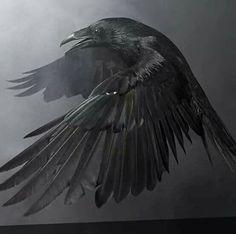 raven and crow posters Quoth The Raven, Raven Bird, Raven Wings, Crow Bird, Nicolas Vanier, Rabe Tattoo, Flora Und Fauna, Dark Wings, Tattoo Zeichnungen