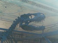 Tyrannosaurus Natural History Museum London