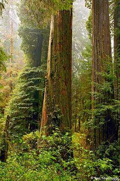 Redwood National Park...my favorite forest!