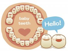 baby teeth: for the best dental assistant in the world & best twin mommy! Baby Kind, My Baby Girl, Our Baby, Baby Health, Kids Health, Shower Bebe, Baby Development, Everything Baby, Baby Milestones