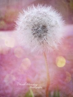 """Dreams and wishes and kisses from princes !"" ... A favourite wish my childhood best friend and I made when we found dandelions in the forest !"