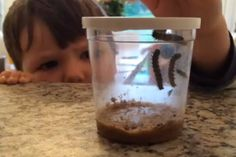 Insect Lore – Review #entertainingkids #insects #ideasforkids #kidsactivities