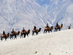Camel Safari in Ladakh, a worthwhile adventure. To know more check out http://www.thrillophilia.com/blog/camel-safari-in-ladakh/