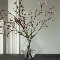Louisiana state flower is the magnolia; these tulip magnolia branches offer a colorful floral greeting. Fresh Flowers, White Flowers, Beautiful Flowers, Flowers Nature, Draw Flowers, Flowers Vase, Bouquet Flowers, Arrangements Ikebana, Floral Arrangements