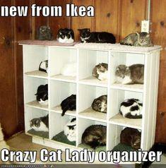 new from Ikea Crazy Cat Lady organizer - Cheezburger