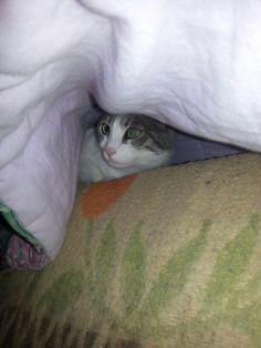 """""""Mi nascondo sotto il piumone!"""""""