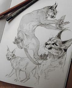Animal Sketches, Art Drawings Sketches, Animal Drawings, Drawing Animals, Big Cats Art, Cat Art, Cat Anatomy, Illustration Art, Illustrations