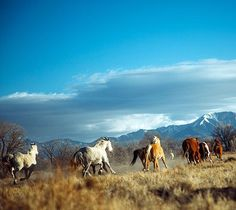 """@ranchlands on Instagram: """"The Zapata herd is back from winter vacation and ready for action!"""