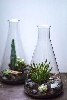 Test tube plant pots! #cool #LoveNature