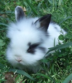 Double mane Lion Head* Baby Bunny I want one sooo bad for my birthday :o(