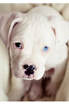So cute I want him:):):):)