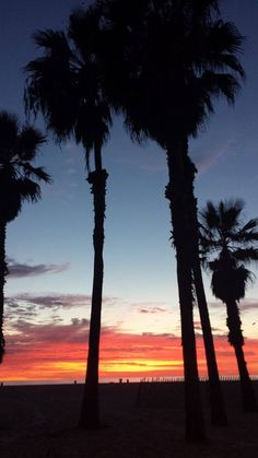Santa Monica beach (Los Angeles) at sunset as seen by our Elite Adventure Tours family who were having so much fun on the tour they just wanted to keep on going and going and...  Los Angeles sightseeing need not stop with the setting sun.  There is lots to see after dark.