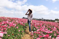 The Charming Olive | Carlsbad Flower Fields Day Trip