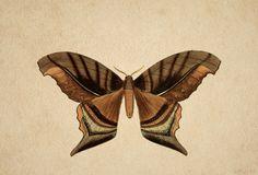 moths GIF