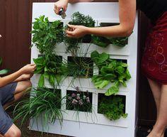 hanging herb garden box