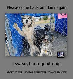 please adopt, rescue, foster, volunteer!
