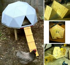 Chicken coop designs and ideas are essential when raising poultry. With this updated list, planning and building a chicken coop has never been easier! RELATED: Raising Chickens In Your Homestead Cheap Chicken Coops, Diy Chicken Coop Plans, Building A Chicken Coop, Chicken Ideas, Chicken Coop Designs, Small Space Gardening, Small Garden Design, Chicken Roost, Geodesic Dome