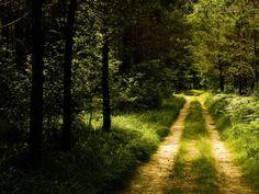 Papel de Parede Caminho da floresta Caminho da floresta. >ultradownloads.com.br