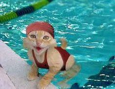 Cat dip