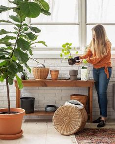 Learn how to water a fiddle leaf fig as well as how to care for your fiddle leaf tree in general! #fiddleleaffig #figtreecare #waterfig #figplant Potting Station, Outside Plants, All About Plants, Plant Crafts, Black Interior Doors, Fiddle Leaf Fig Tree, Backyard Plants, Room With Plants, Pinterest Home