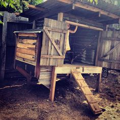 recycle, sustainable, chook pen,chicken house