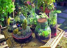 Lanterne per illuminare le vostre serate estive, mini habitat per le piante grasse, vasi decorativi o perfetti contenitori per i sali colorati. Come riciclare i barattoli di vetro che non usate più.