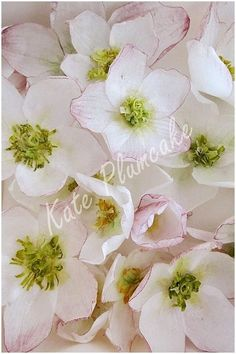 Wafer paper fatal attraction by Kate Plumcake