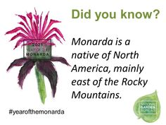 Monarda is a native of North American, mainly east of the Rocky Mountains - Year of the Monarda - National Garden Bureau Large Flowers, Red Flowers, Colorful Flowers, Beautiful Flowers, Homemade Potpourri, Bushes And Shrubs, American Meadows, Chicago Botanic Garden, Natural Ecosystem