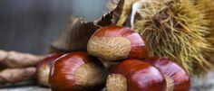 Esskastanien, lecker, süß und ein wunderbarer winterlicher Schmaus. Esskastanien gehören zu den Lieblingen des Winters und wärmen nicht nur kalte Wintertage auf, sondern bereichern diese mit viel Gesundheit... http://superfood-gesund.de/esskastanie/