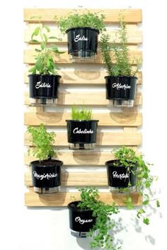 indoor garden With the increase in organic gardening many have been planting their own fruits and veggies. Here are some herb garden planter ideas that you can do yourself. Herb Garden Design, Garden Types, Garden Design Ideas, Garden Inspiration, Organic Gardening, Gardening Tips, Vegetable Gardening, Container Gardening, Gardening Zones