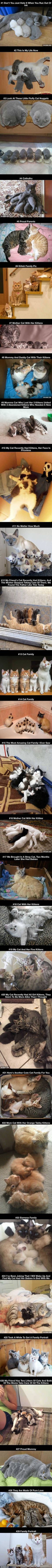 29 Proud Cat Mommies With Their Kittens