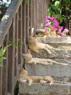 Once there were 4 cats on the steps meow meow meow what's next ......