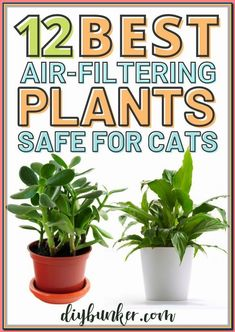 (paid link) Houseplants That Are secure for Cats and Dogs. #catsafehouseplants