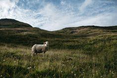 Bruno Appert had always dreamt of running his own farm. By deciding to rear… Zermatt, Alps, Farmer, The Outsiders, Running, Beautiful, Mont Blanc, Keep Running, Farmers