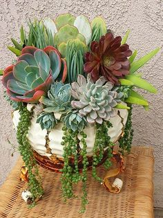 Beautiful succulent container - Nature Containers Vintage Garden Art - Google Search More