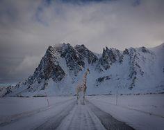 Visual Strangeness 3 Photo by Bjørg-Elise Tuppen