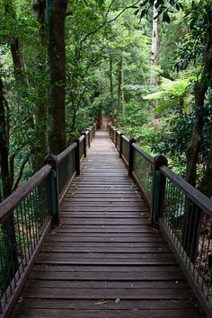 Under normal circumstances the forest canopy towers far above you, but, in a special number of spots across Australia, you can get up close and personal with life in the treetops. Old Bridges, England Australia, North Coast, Future Travel, Australia Travel, Garden Bridge, Travel Around, Day Trips, New England