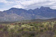 Tucson, Arizona, Clay, Mountains, Nature, Travel, Clays, Naturaleza, Viajes