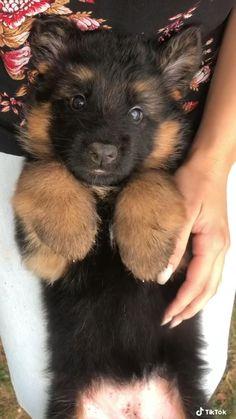 Super Cute Puppies, Cute Baby Dogs, Cute Little Puppies, Cute Funny Dogs, Cute Dogs And Puppies, Cute Funny Animals, Cute Dog Pic, Cute Puppy Pics, Cute Pics