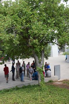 Yad Vashem, visitors standing by the tree planted in honor of the Righteous Among the Nations Irena Sendler, spring 2015