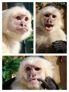 monkeys model too!