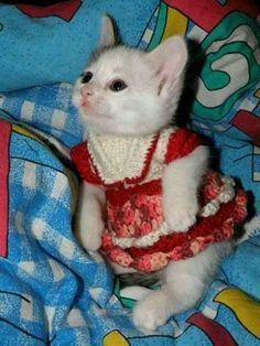 Pretty CATS (ᵔᴥᵔ) Kitty in a sweater dress Cute Cats And Kittens, I Love Cats, Crazy Cats, Kittens Cutest, Ragdoll Kittens, Kittens Meowing, Bengal Cats, Pretty Cats, Funny Cats