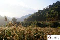 Bergstrasse mit Kornfeld Felder, Thailand, Mountains, Nature, Travel, Outdoor, Tour Operator, Voyage, Outdoors