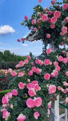 Beautiful Flowers Garden, Exotic Flowers, Amazing Flowers, Beautiful Roses, Beautiful Gardens, Plants With Pink Flowers, Pretty Flowers, Flowers Gif, Paper Flowers