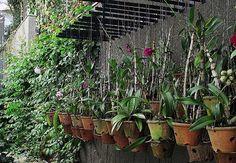 Hanging garden!