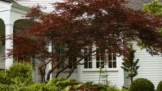 Small-space gardening can be a challenge when it comes to trees. We show you the best trees for small yards, including flowering trees like crabapple and the ever-popular Japanese maple, tree-planting tips, and more.