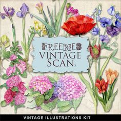 Far Far Hill - Free database of digital illustrations and papers: Freebies Vintage Floral Illustrations Kit Rose Illustration, Floral Illustrations, Digital Illustration, Vintage Flowers, Vintage Floral, Far Hills, Vintage Vignettes, Digital Scrapbooking Freebies, Digital Papers