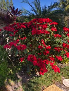 Outdoor Plants, Indoor Outdoor, Poinsettia Plant, Christmas Plants, Houseplant, Plant Care, Go Outside, The Fresh, Outdoors