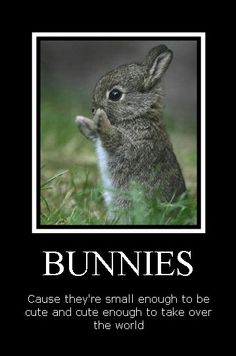 The truth about bunnies!
