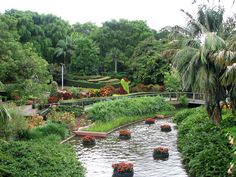One of my favourite places ... Roma Street Parklands, Brisbane, Australia.